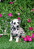 PUP 03 FA0035 01