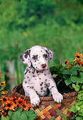 PUP 03 FA0036 01