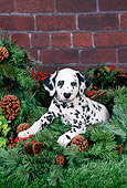 PUP 03 FA0038 01