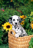 PUP 03 FA0040 01
