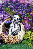 PUP 03 FA0041 01