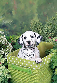 PUP 03 FA0042 01