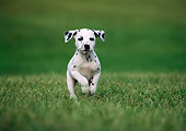 PUP 03 GR0001 04