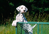 PUP 03 JN0001 01