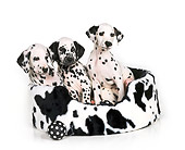 PUP 03 RK0093 05