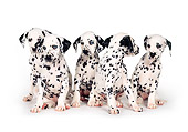 PUP 03 RK0116 16