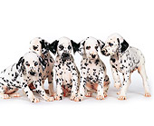 PUP 03 RK0116 27