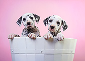 PUP 03 XA0002 01