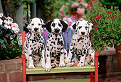 PUP 03 CE0001 01
