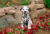 PUP 03 CE0002 01
