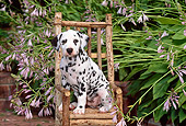 PUP 03 CE0003 01