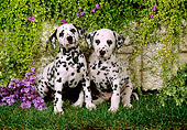 PUP 03 FA0001 01
