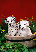 PUP 03 FA0002 01