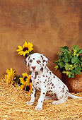 PUP 03 FA0004 01