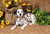 PUP 03 FA0005 01