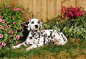 PUP 03 FA0006 01