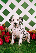 PUP 03 FA0007 01