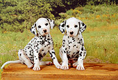 PUP 03 FA0010 01