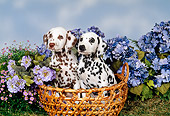 PUP 03 FA0011 01