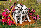 PUP 03 FA0012 01
