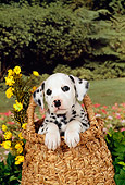 PUP 03 FA0014 01