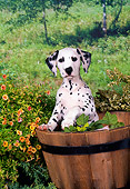 PUP 03 FA0016 01