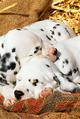 PUP 03 LS0001 01