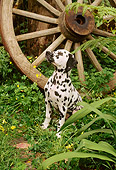 PUP 03 RC0001 01
