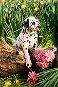 PUP 03 RC0004 01