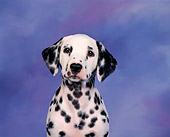 PUP 03 RK0002 01