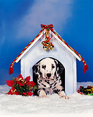 PUP 03 RK0011 08