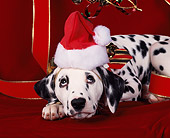 PUP 03 RK0032 02