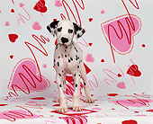 PUP 03 RK0084 01