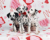 PUP 03 RK0086 02