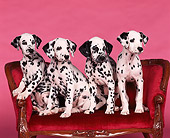 PUP 03 RK0090 02