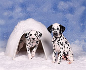 PUP 03 RK0101 04