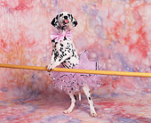 PUP 03 RK0110 15