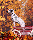 PUP 03 RK0123 04