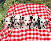 PUP 03 RK0126 01