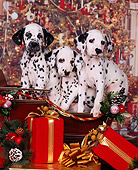 PUP 03 RK0127 11