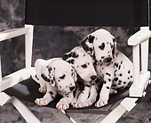 PUP 03 RK0154 05