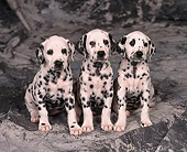 PUP 03 RK0156 01