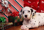 PUP 03 RK0186 08