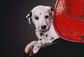 PUP 03 RK0190 08