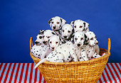 PUP 03 RK0192 06