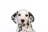 PUP 03 RK0222 01
