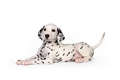 PUP 03 RK0223 01