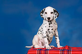 PUP 03 RK0224 01