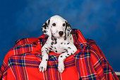 PUP 03 RK0225 01