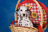 PUP 03 RK0226 01